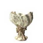Clam Shell Pedestal